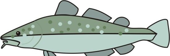 Codfish Coloring Pages