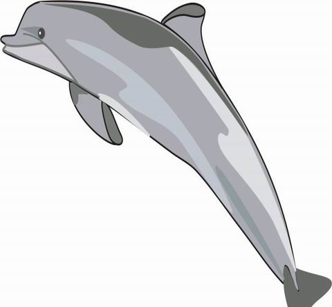 Dolphin Coloring Pages For Kids To Color And Print