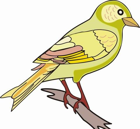 Finch Coloring Pages