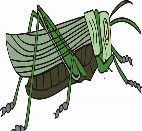 Grasshoper Coloring Pages