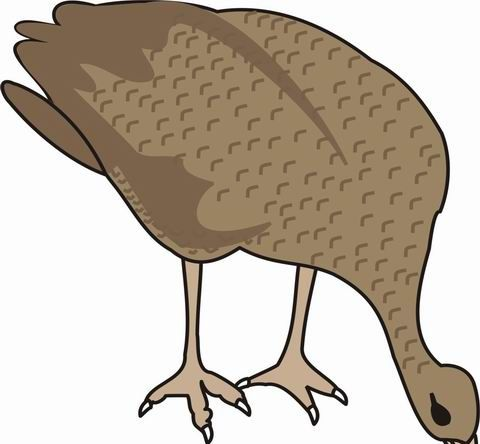 Grouse Coloring Pages for Kids to Color and Print