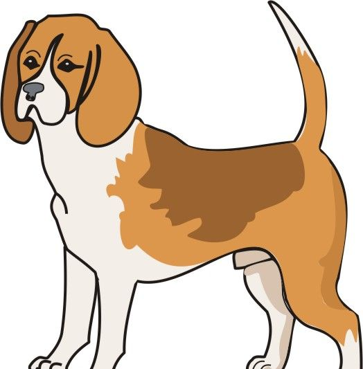Hound Coloring Pages
