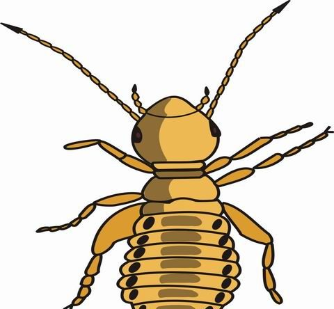 Louse Coloring Pages