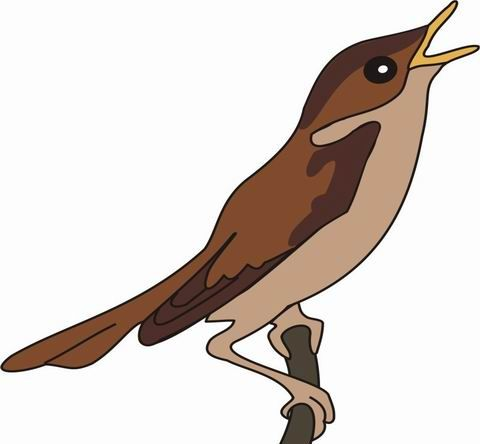 Nightingale Coloring Pages