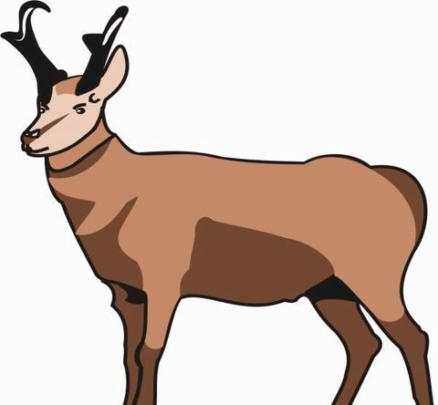 Pronghorn Coloring Pages