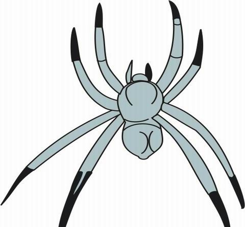 Spider Coloring Pages for Kids to Color and Print