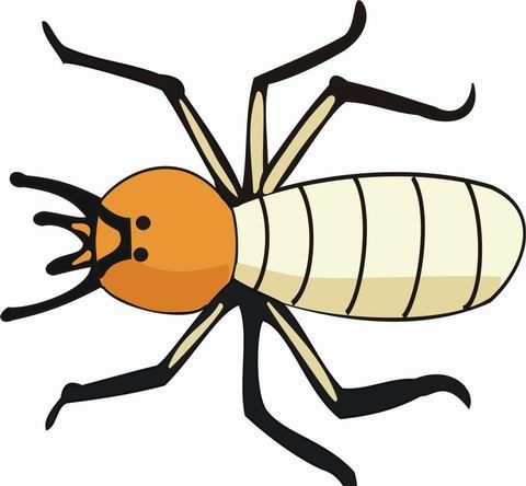 Termite Coloring Pages